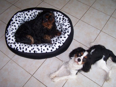 tapis pour chiens mania sur notre blog. Black Bedroom Furniture Sets. Home Design Ideas