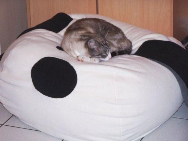 Le chat apprécie le pouf